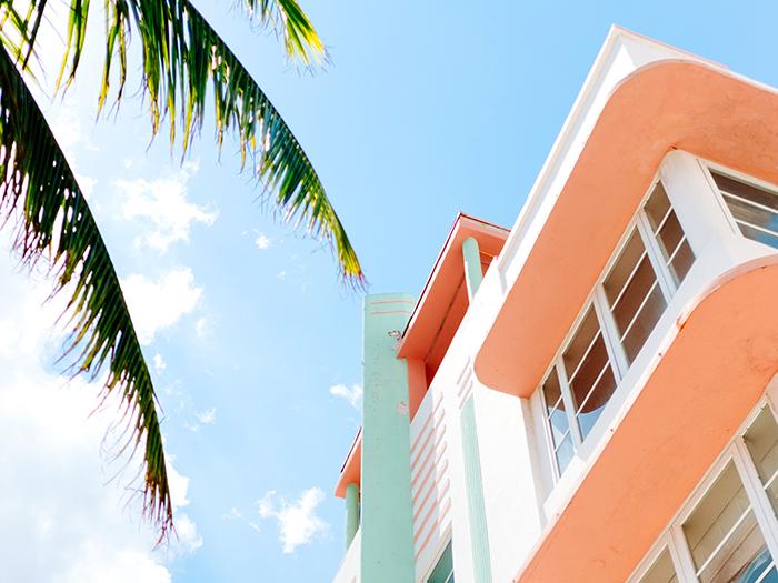 椰子の木と家